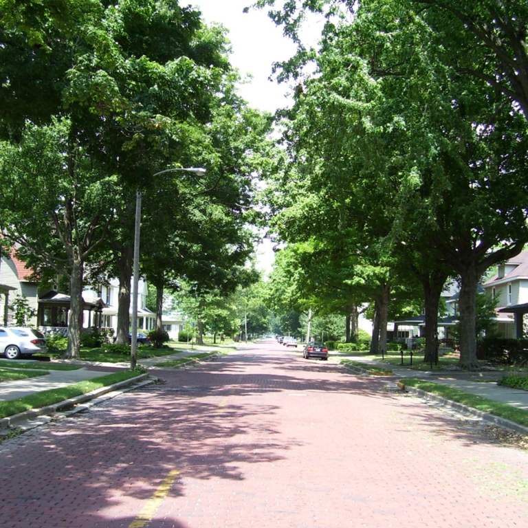 A tree canopy over a residential area
