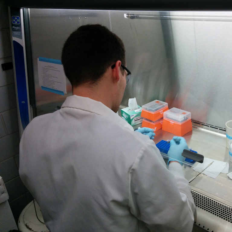 An undergraduate student collecting DNA from tick samples