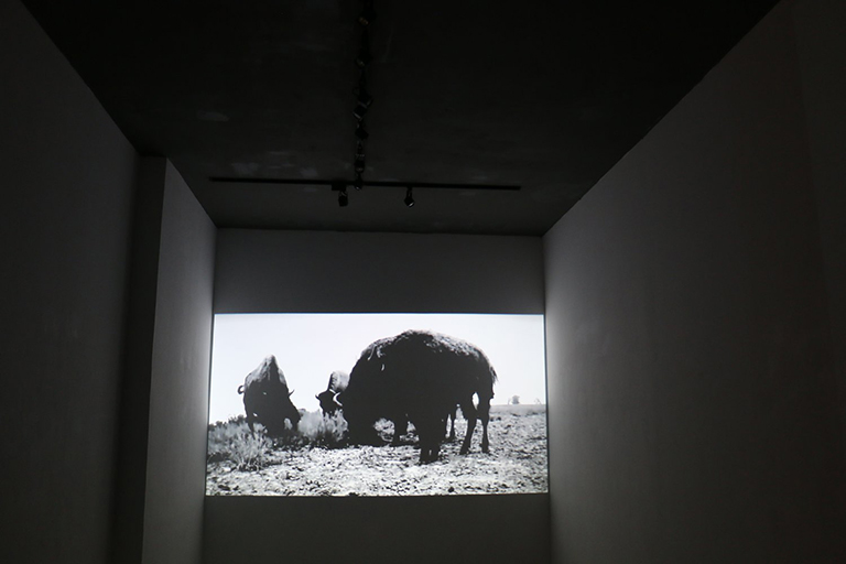 a projected image of a bison